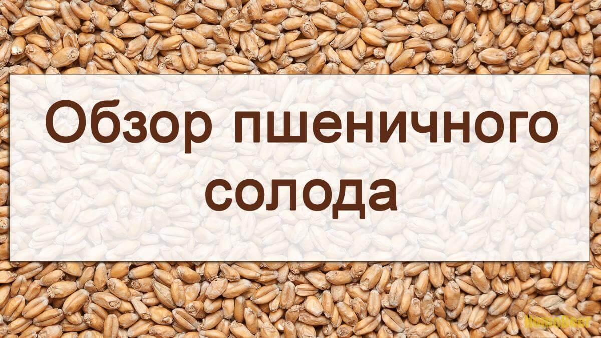 Видеообзор солода Wheat видео